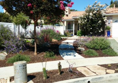 drought tolerant landscaping Amaral After
